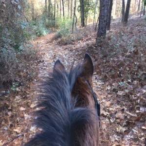 Riding the trails in the Walter Moss Foundation in Southern Pines, North Carolina